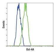 Oct-4A Antibody (MA5-14845)
