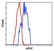 eIF4G Antibody (MA5-14971)