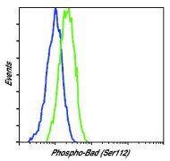Phospho-BAD (Ser112) Antibody (MA5-15085)