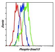 Phospho-SMAD1/SMAD5 (Ser463, Ser465) Antibody (MA5-15124)