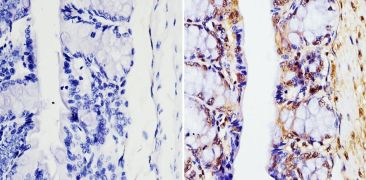 GAPDH Loading Control Antibody (MA5-15738-1MG)