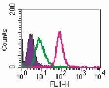 TLR2 Antibody (MA5-16203)