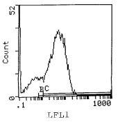 I-Ak Antibody (MA5-17773)
