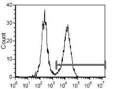 I-Ad Antibody (MA5-17779)