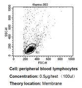 CD58 Antibody (MA5800)