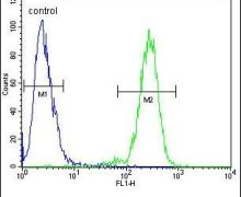 MAN2A1 Antibody (PA5-24447)