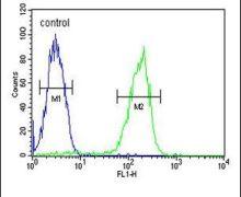 MAP1S Antibody (PA5-25672)