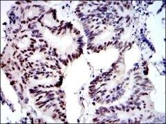 MCM2 Antibody (MA5-15923)