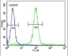 MEIS2 Antibody (PA5-25432)