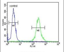 MRAP Antibody (PA5-26979)