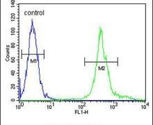 MRPS24 Antibody (PA5-23999)