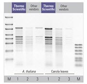 Superior yields of total RNA from various plants