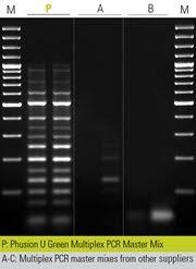 Multiplex PCR using whole blood samples