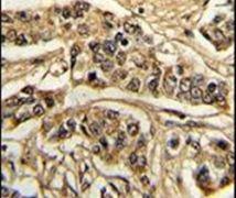 NCS1 Antibody (PA5-11649)
