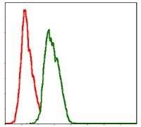 NEDD8 Antibody (MA5-17133)