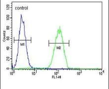 Oxytocin Antibody (PA5-26701)