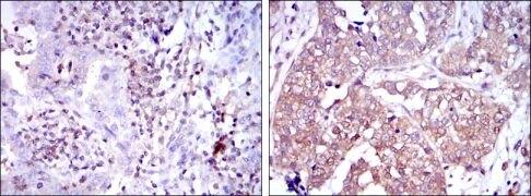 NFkB p50 Antibody (MA5-15870)