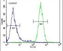 NGRN Antibody (PA5-24132)