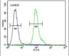 NPM3 Antibody (PA5-25254)