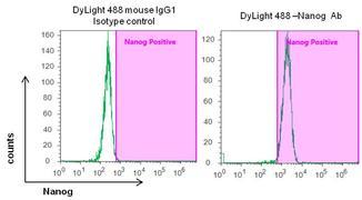 Nanog Antibody (MA1-017-D488)