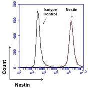 Nestin Antibody (MA1-110)