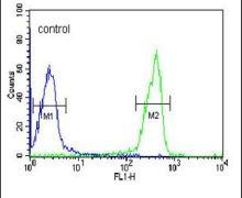 OMD Antibody (PA5-14382)