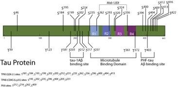 Phospho-Tau (Ser422) Antibody (OPA1-03151) in