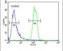 OR2M3 Antibody (PA5-24350)