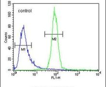 OR52A1 Antibody (PA5-24041)