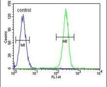 OR52D1 Antibody (PA5-24381)