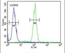 SLC51A Antibody (PA5-26837)