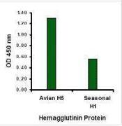 Influenza A HA Antibody (PA1-23094)