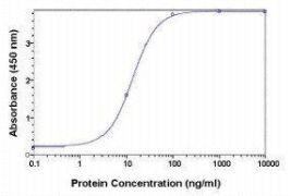 A2M Antibody (PA1-29889)