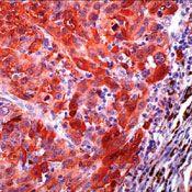 S100 Antibody (PA5-16713)