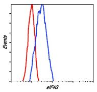 eIF4G Antibody (PA5-17422)