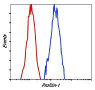 Profilin 1 Antibody (PA5-17444)