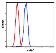 c-Rel Antibody (PA5-17452)