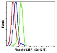 Phospho-53BP1 (Ser1778) Antibody (PA5-17462)