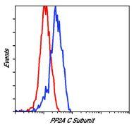 PP2A alpha Antibody (PA5-17510)
