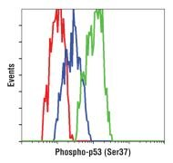 Phospho-p53 (Ser37) Antibody (PA5-17866)
