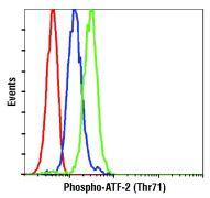 Phospho-ATF2 (Thr71) Antibody (PA5-17885)