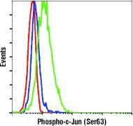 Phospho-c-Jun (Ser63) Antibody (PA5-17890)