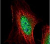 EMP Antibody (PA5-30375)