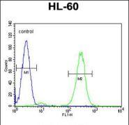 FBXW11 Antibody (PA5-35037)