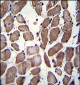 LRP12 Antibody (PA5-35069)