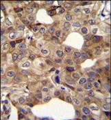Cyclin I2 Antibody (PA5-35081)