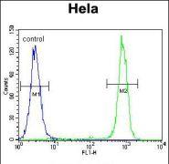 Carboxypeptidase B1 Antibody (PA5-35093)