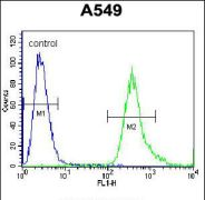 SLC25A6 Antibody (PA5-35113)