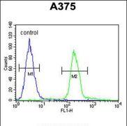 Transthyretin Antibody (PA5-35315)