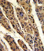 TPT1 Antibody (PA5-35332)